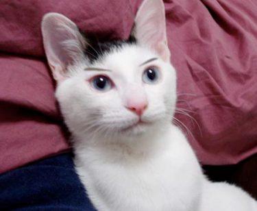 判決8 愛猫にエサ。俺にも早くエサをください。