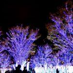 JR博多駅 クリスマスイルミネーション